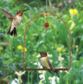 humingbirdswingSEHHHUM.jpg