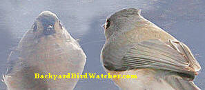 BIRDREFLECTIONPIC.jpg