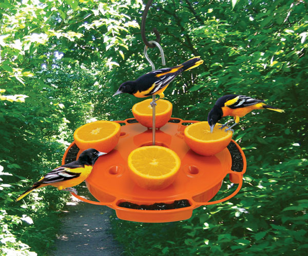 Oriole Bird Feedersjam Feedershow To Attract Orioles At