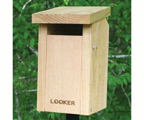 Songbird essentials bluebird house slot entrance hole for Song bird house plans