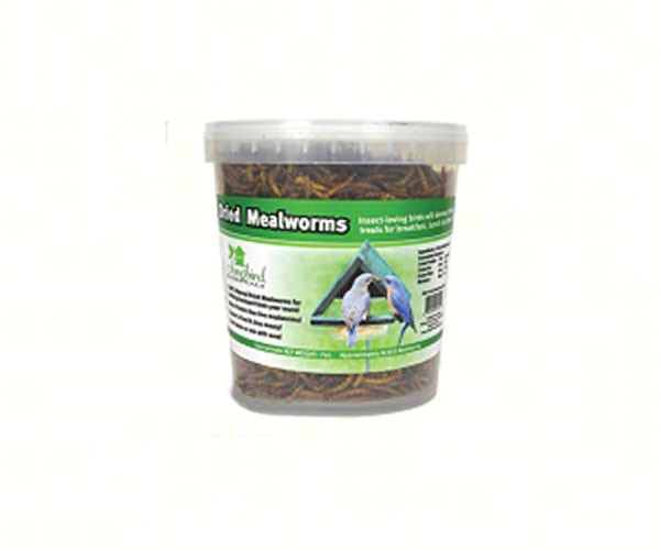 SE647mealworms.jpg