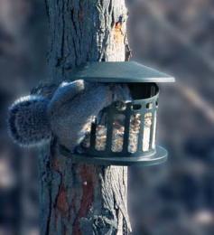 squirreldiner2.jpg