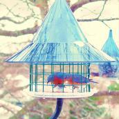 bluebirdfeederimage.jpg