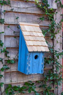 BirdHousesbunkhouse192A.jpg