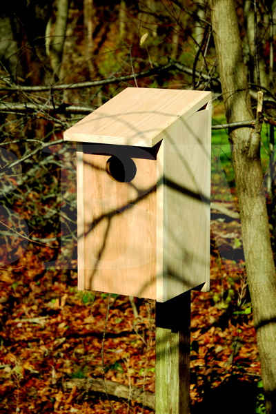 139A Wood Duck Joy Box.jpg