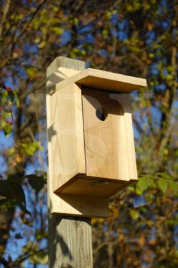 135A Eastern Bluebird Joy Box.jpg