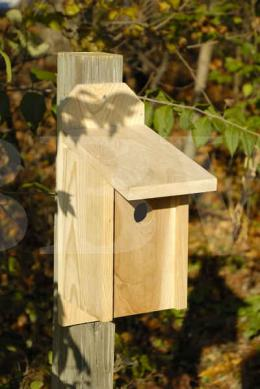 136A Western Bluebird Joy Box.jpg