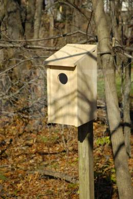 138A Screech Owl Joy Box.jpg
