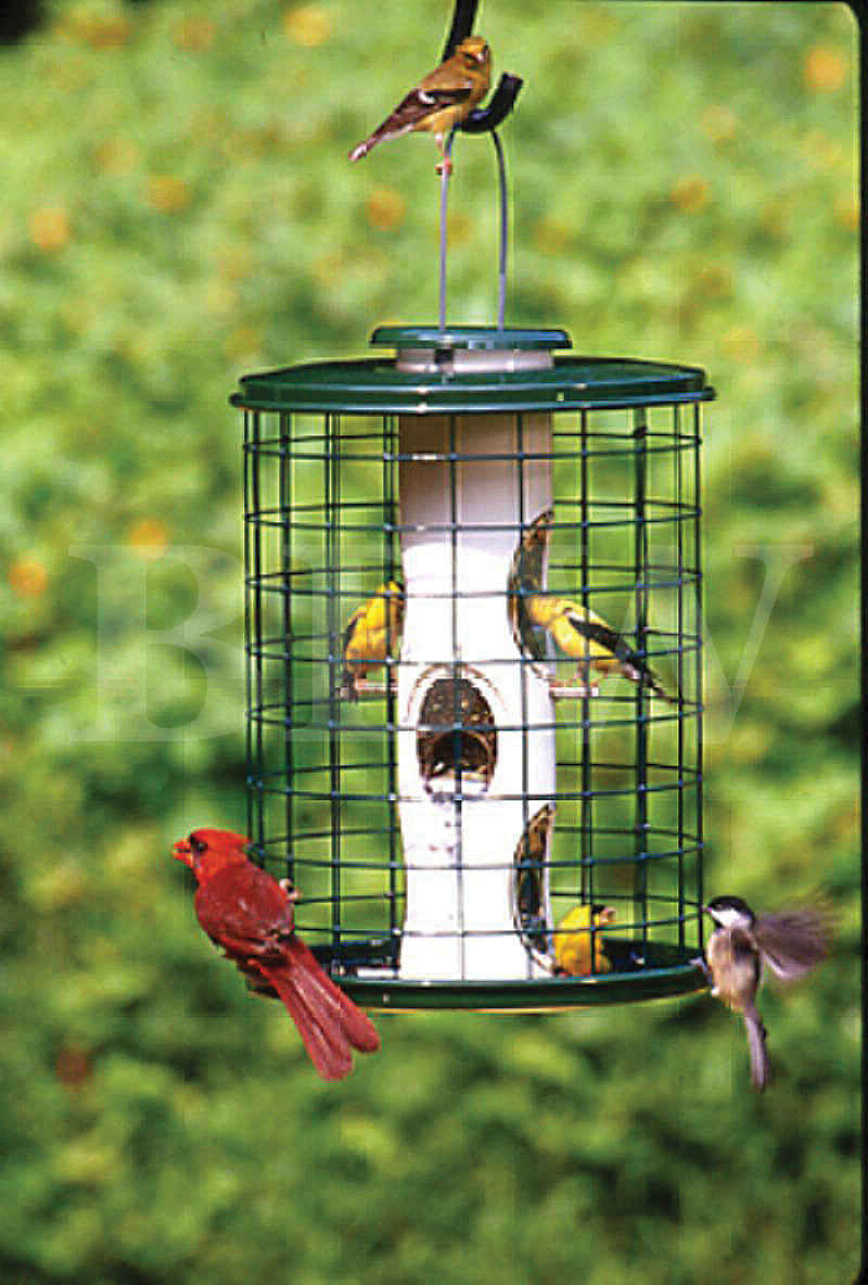 Woodlink Avian Mixed Seed Feeder With Wire Cage